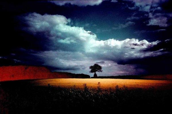 Photo argentique traitement croisé colza et arbre