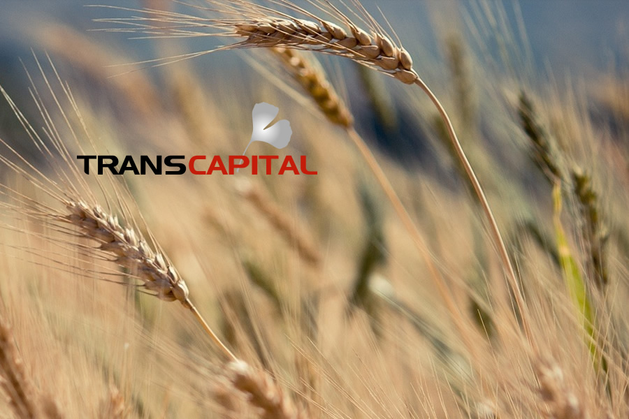 Création site wordpress Corporate « Transcapital »
